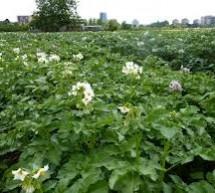 Obaveštenje za proizvođače krompira