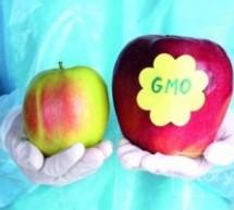 ЗА И ПРОТИВ ГМО